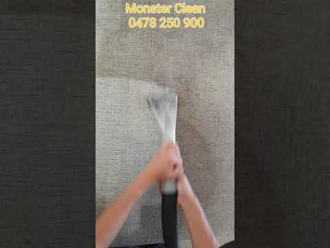 How to clean dog pee from couch 2019 New