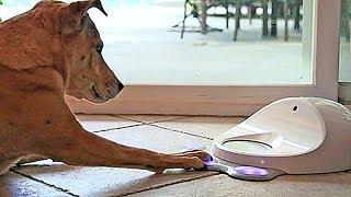 10 самых УДИВИТЕЛЬНЫХ АКСЕССУАРОВ для домашних животных
