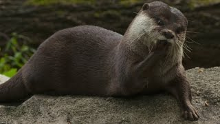 What Do Otters Eat?