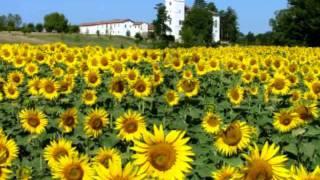 Johann Strauss : Sonnenblume (Sunflowers), polka-mazurka for orchestra, Op. 459