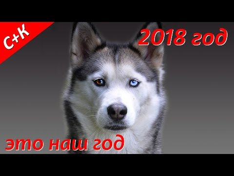 Год собаки 2018 - Познавательные и прикольные видеоролики