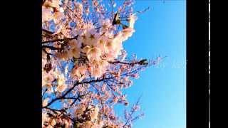 今年も桜の季節がやってきましたね~(o^^o) 今年はこの曲を選んで弾き語...