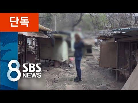 [단독] 청와대에 유기견 보낸 단체, 멀쩡한 개 '수백 마리 안락사' / SBS