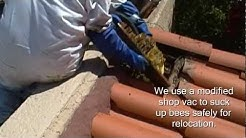 """Bee Removal in Mesa AZ"" - Lady Bug Pest Control"