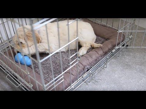 Download Een bench is onmisbaar bij de opvoeding van een puppy!