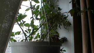 Vlog - bonus: Растения, чувствительные к месту произрастания.