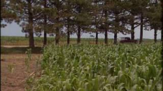 Agroforestry Practices - Windbreaks