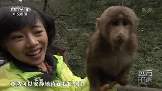 [远方的家]世界遗产在中国 寻访峨眉灵猴  CCTV中文国际