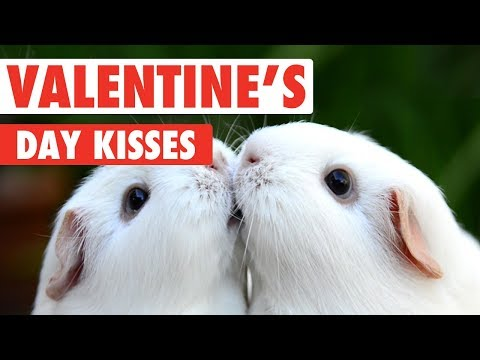 Valentine's Day Kissy Pets | Love Is In The Air
