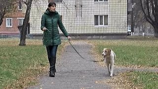 У Сумах живе собака – професійний донор
