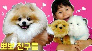 뽀뽀한테 친구들이 생겼어요! 귀여운 강아지 고양이 장난감 놀이cat and dog & Toy 라임튜브