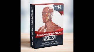 Поверхностные мышцы спины - детальный обзор 3д