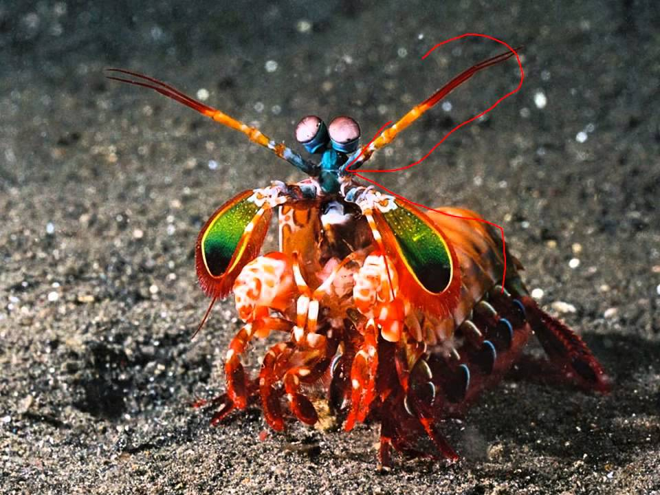 arthropods 2 lecture youtube