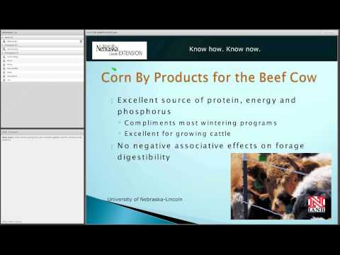 Vitamins and Minerals for Beef Cows