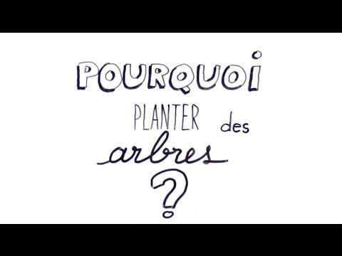 Pourquoi planter des arbres ? - Fondation Yves Rocher