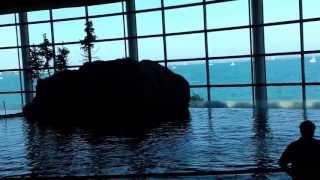 Chicago - Shedd Aquarium  - 2013, July