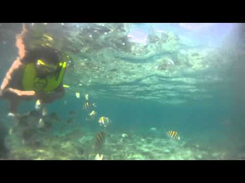 Eden Rock Snorkeling 2   Grand Cayman
