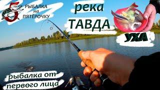 Река Тавда. Рыбалка от первого лица