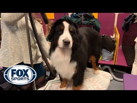 Exclusive look behind the scenes at the 2019 Westminster Kennel Club Dog Show | FOX SPORTS