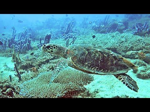 1 et 2 /11/2019 : plongées à Tsarabanjina (Sugar Man et Antsoha) - Archipel des Mitsio - Madagascar