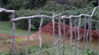 Building A Climbing Bean Pole Fence Trellis Completion - Green Beans