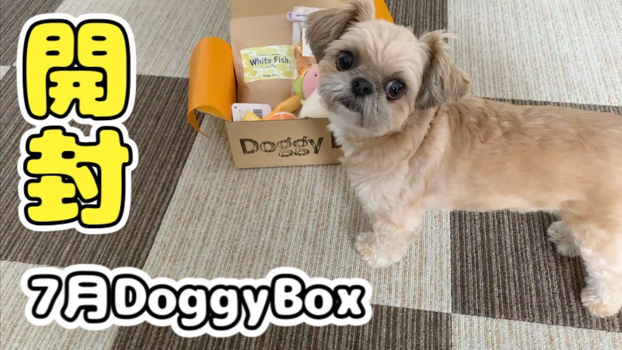 無添加おやつと可愛いおもちゃ ドギーボックス7月号を開封 チワワ×シーズー