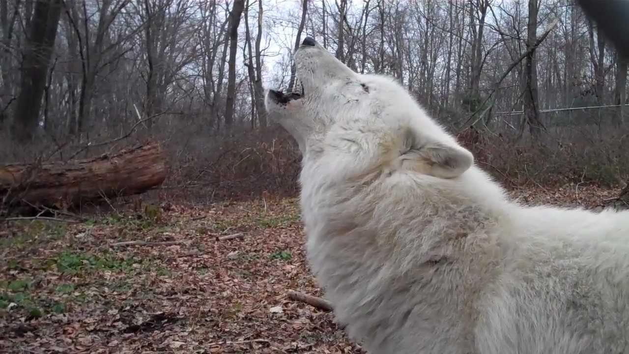 A Special New Year Message From Ambassador Wolf Atka