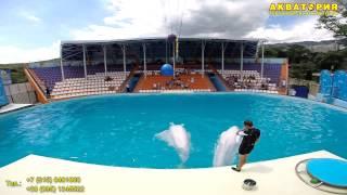 """Театр морских животных """"Акватория"""" (Ялта): трюки белых китов"""