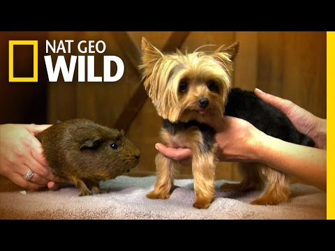 Tiniest Dog - Lucy | World's Smallest Pets