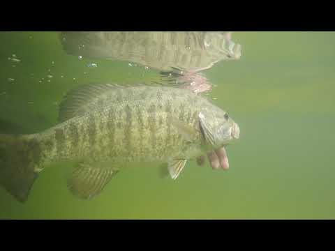 Big Bass On Lake Bellaire
