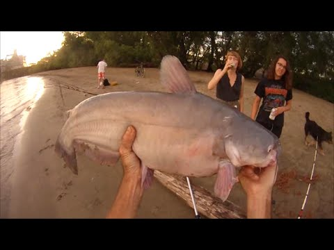 Good Catfish Fishing On Mississippi River