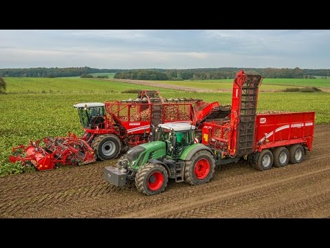 Grimme REXOR 930 & RUW 4000 | self-propelled 9-row Beet Harvester & Beet Transfer Trailer