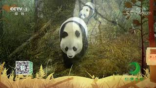 《秘境之眼》 大熊猫 20210101| CCTV - YouTube