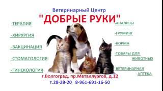 """Ветеринарный центр """"Добрые Руки"""" Волгоград, пр.Металлургов, д.12."""