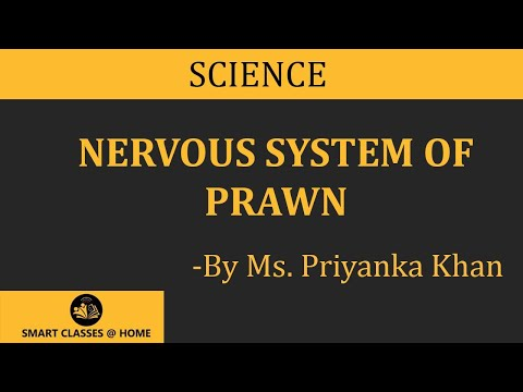Nervous System of Prawn lecture  BSc Biotechnology by