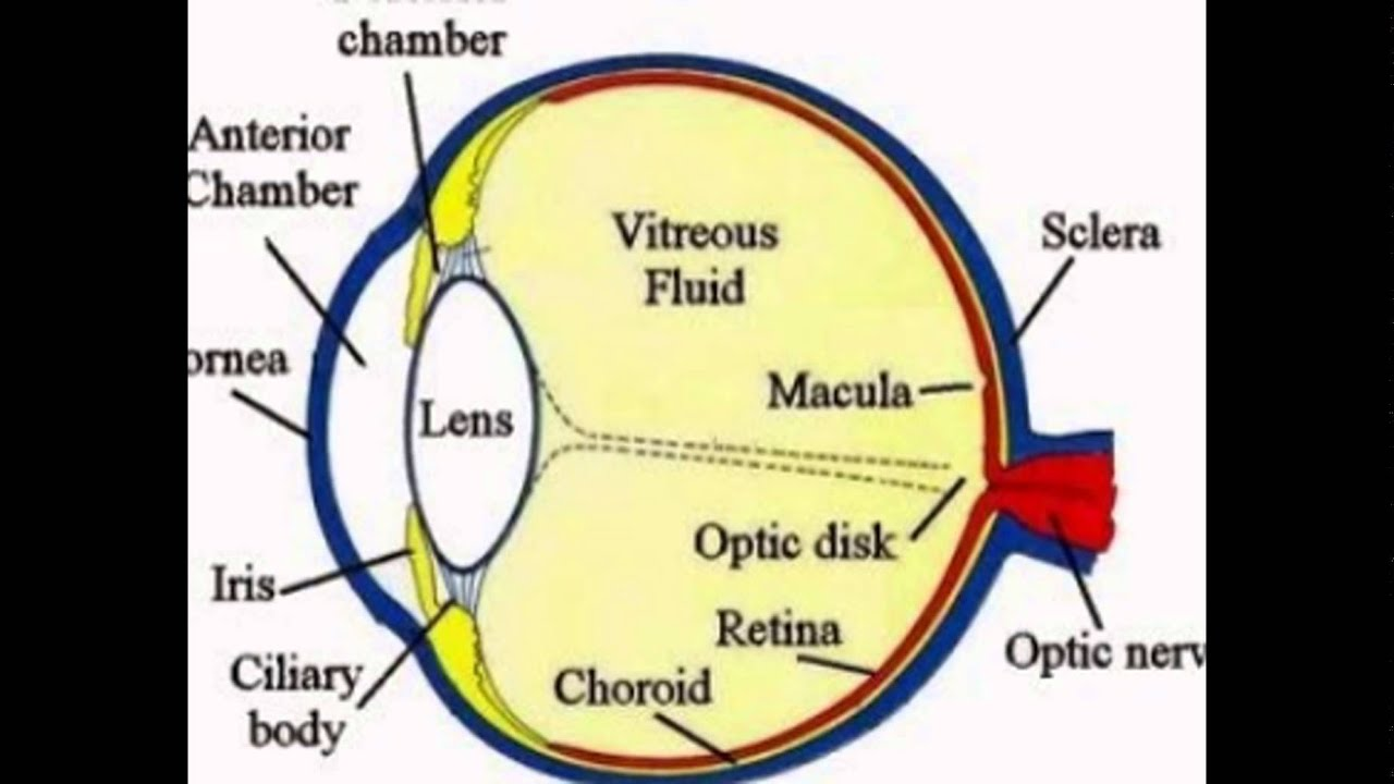 Human eye and its functions youtube human eye and its functions ccuart Image collections