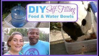 DIY Self-Filling Food & Water Bowls | Cats or Dogs | Large Food Dispenser