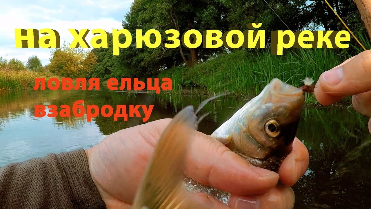 Ходовая рыбалка на ельца. Поиск перспективных мест для ловли.