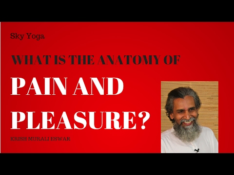 What Is The Anatomy Of Pain And Pleasure?