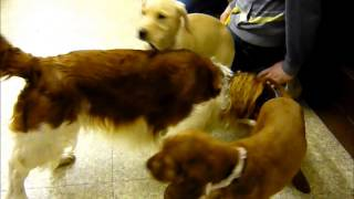 Puppy Parties At Broad Lane Vets Coventry