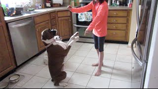 How To Train Your Dog! (wk 217)   Bratayley