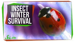 How Do Insects Survive the Winter?