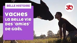 La belle vie des vaches de Gaël