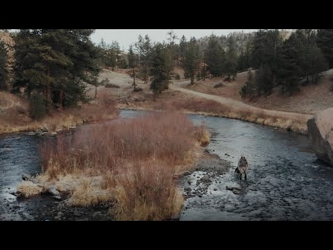 Learn To Fly Fishing With Ascent Fly Fishing - A Fly Fishing Community Like No Other!
