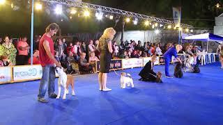 Международная выставка собак Азия Виннер 2018. Часть 9