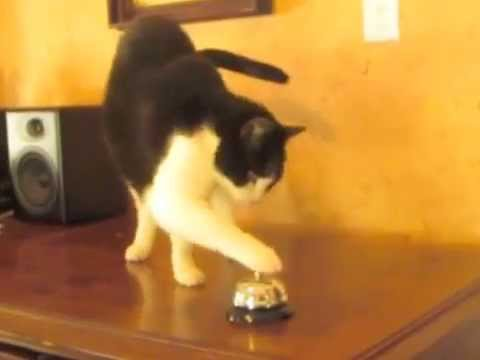 Smart cat rings bell for service …cat clicker training