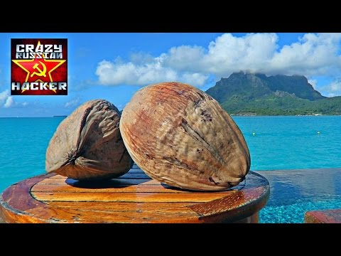 How to Husk and Open Coconut without Tools