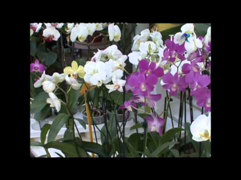 Orhideea De Camera Youtube