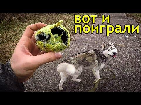 ХАСКИ ИГРЫ С МЯЧОМ/ Husky, games with a ball