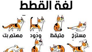 كيف تفهم قطتك بشكل أفضل؟